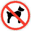 non_chien