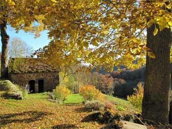 pigsty_autumn